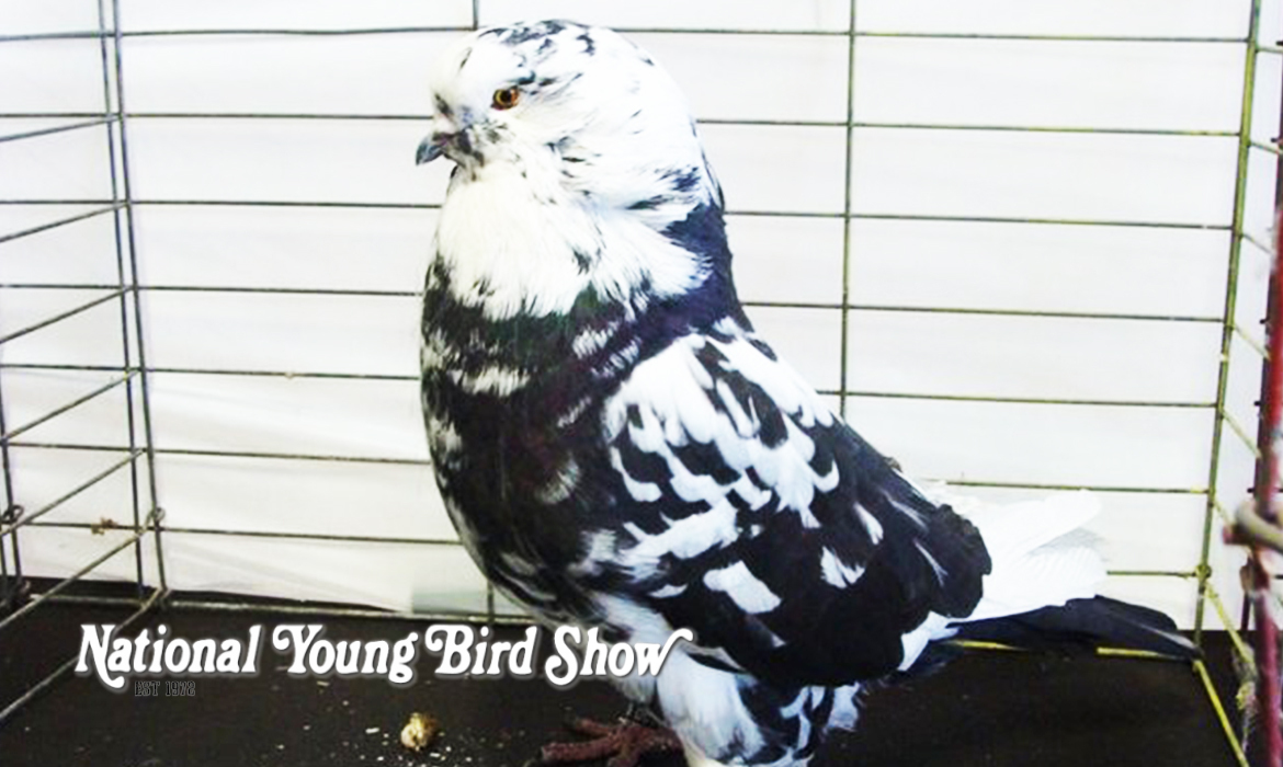 The 2020 National Young Bird Show Has Been Canceled