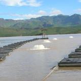3HP 240V 3 phase AF Lake and Pond Surface Aerator