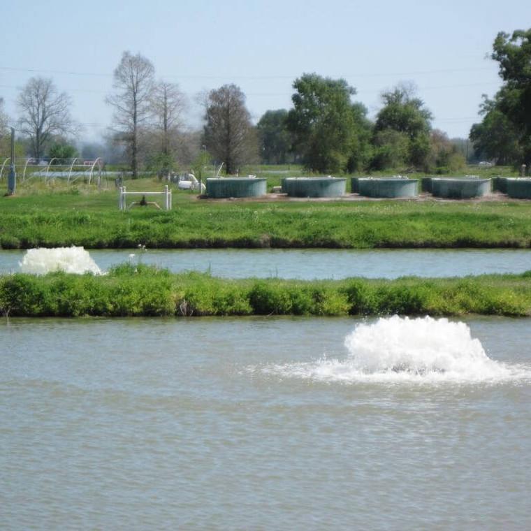 2HP 240V 3 phase AF Lake and Pond Surface Aerator