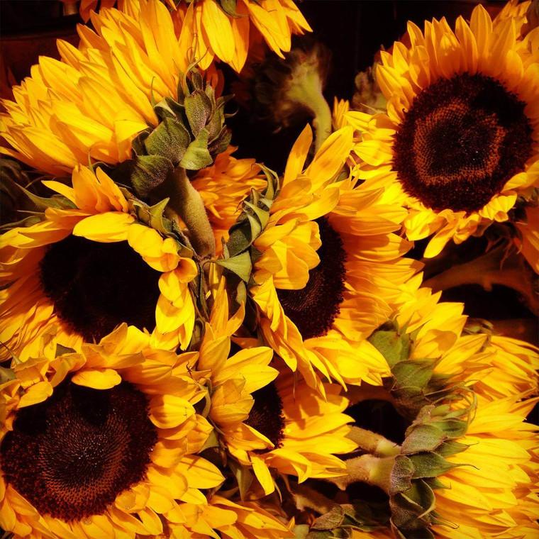 Rustic Sunflowers Outdoor Wall Art