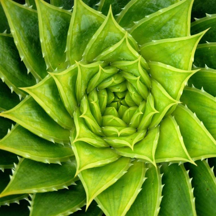 Spiral Aloe Outdoor Wall Art