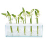 Ada Glass Panel Vase - 5 Hole