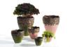 """Curiosities Vase 7.5""""x 8"""" Pink or Green"""