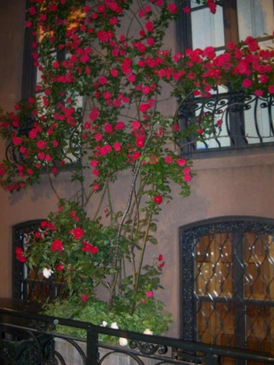Wrought Iron Window Boxes / Planters