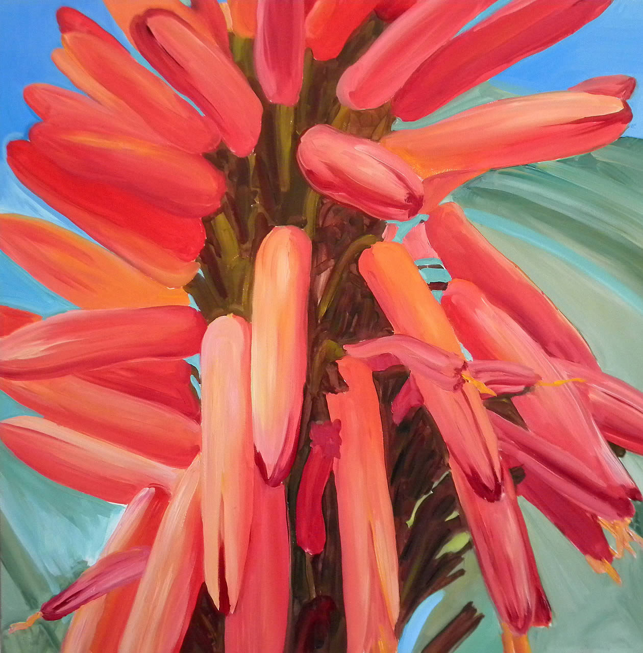 Red Aloe Vera Flowers
