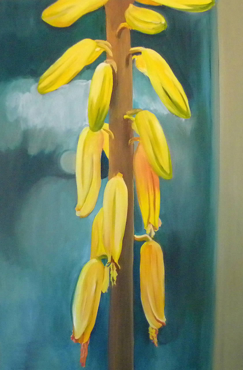Yellow Aloe Vera Flowers