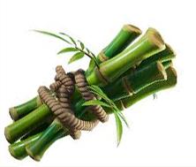 bambbo-design.jpg