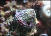 Outrageous Saltwater Nano 10 Pack - SHIPS FREE