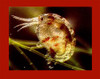 Amphipods & Copepods - 250