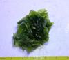 Dark Green Ulva