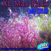 Large Refugium Algae Pack - 11 items - Free Shipping & Excellent for Nutrient Control in an Aquarium