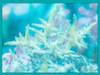 Green Spicifera Macro Algae (ACANTHOPHORA SPICIFERA)