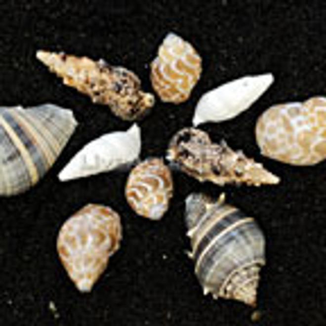 10 Empty Shells