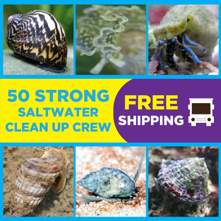 50 Strong Saltwater Clean Up Crew - Ships FREE