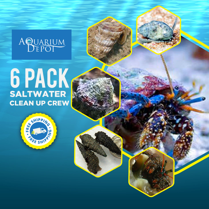 6 Pack Saltwater Clean Up Crew - Ships FREE