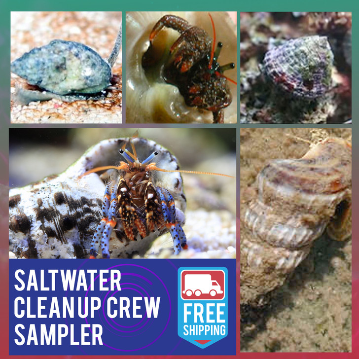 Saltwater Clean Up Crew Sampler - Ships FREE
