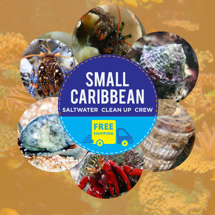 Small Caribbean Saltwater Clean Up Crew