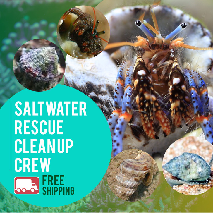 Saltwater Rescue Clean Up Crew - Ships FREE