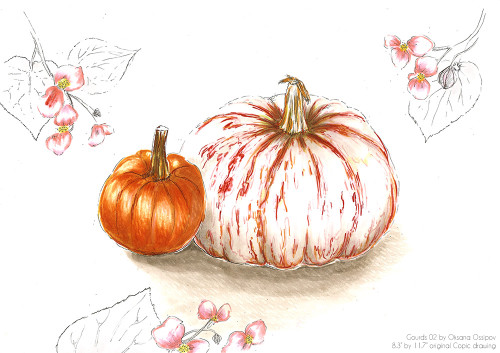 Gourds 02, original still life Copic drawing by artist Oksana Ossipov. Copic markers on paper, 8.3 by 11.7 in. Full view.