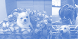 Our Core Values, as Embodied by the Dogs of Group Vertical