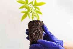 organic-grown-img.jpg