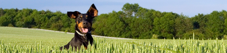 banner-dog.jpg