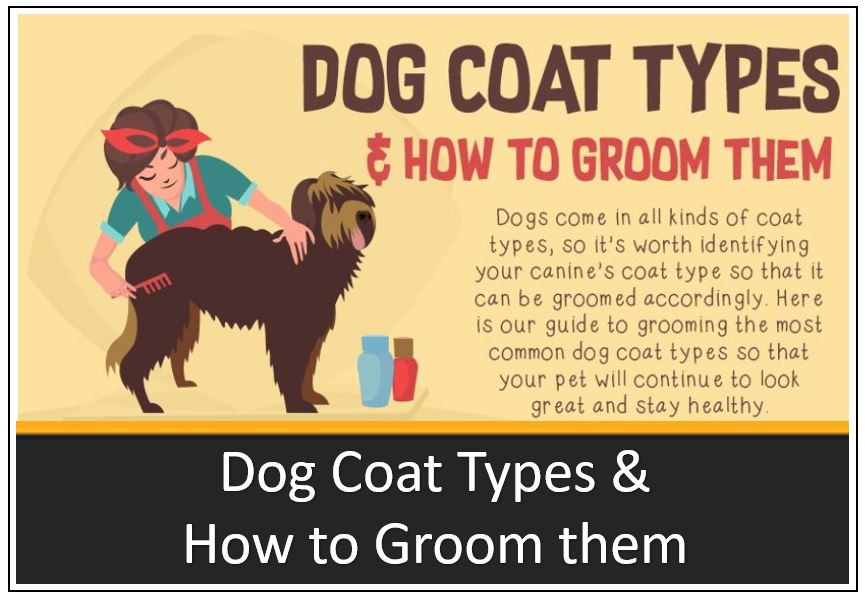 infographic-thumbnail-dog-coat-types-and-how-to-groom-them-1.jpg