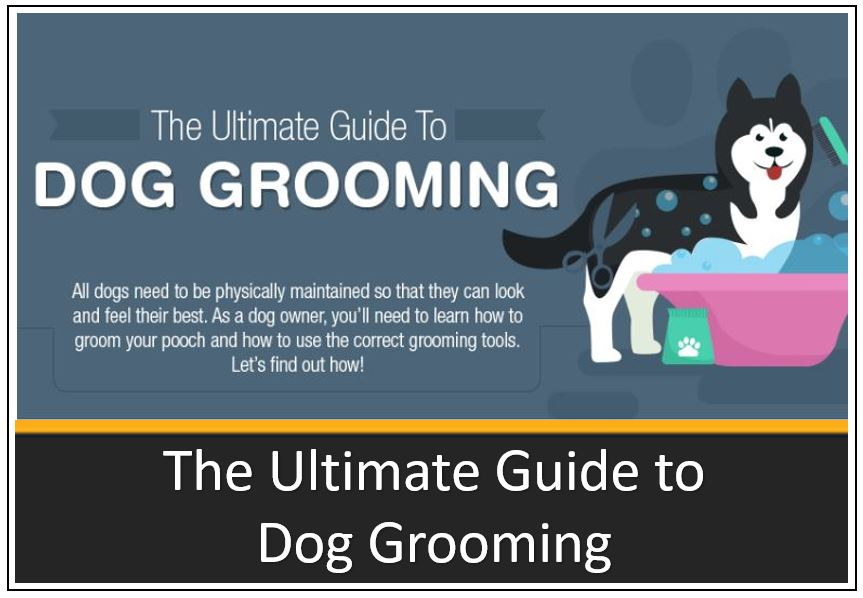 infographic-thumbnail-the-ultimate-guide-to-dog-grooming-1.jpg