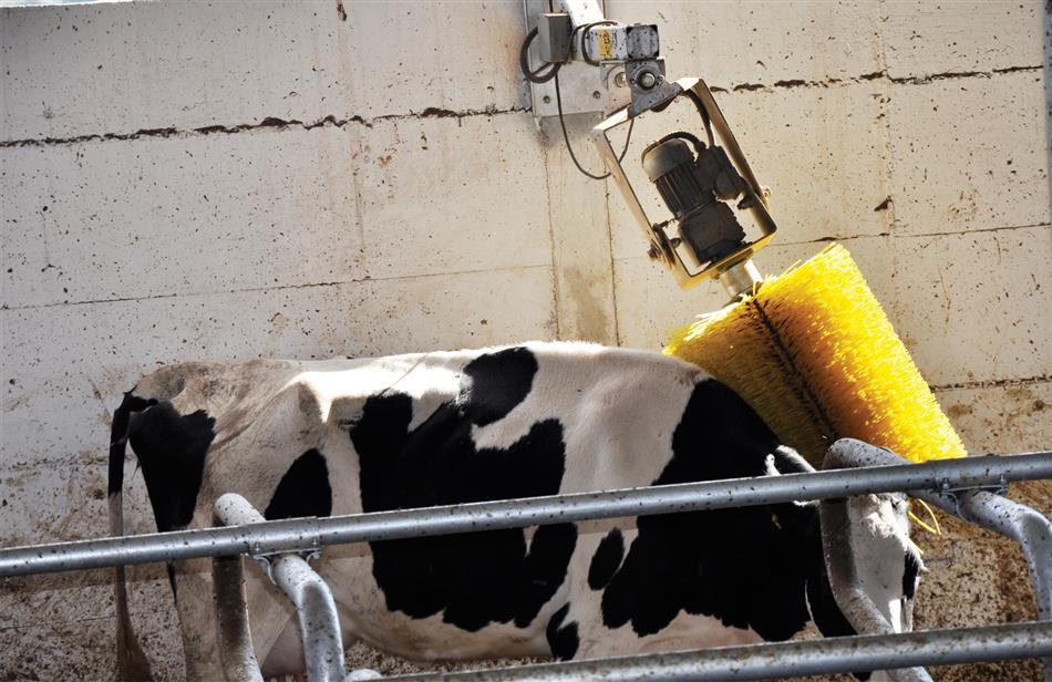 sezer-cattle-brush-4.jpg