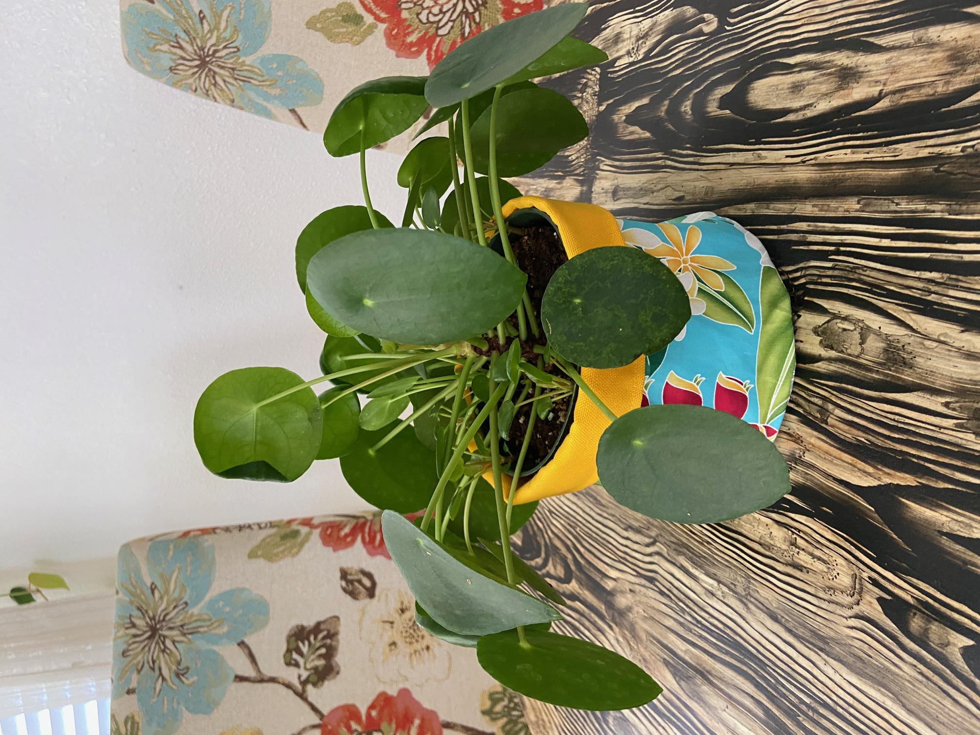 plant pot, reversible fabric cotton canvas, tropical prints