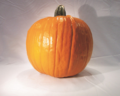 Gold Rush Pumpkin