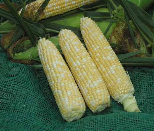 Xtra Tender 20173 Sweet Corn