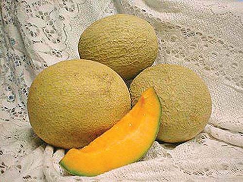 Goddess F1 Melon