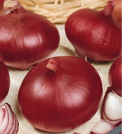 Red Burgundy Onion - UN