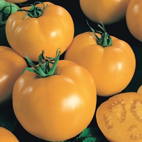 Sunny Boy F1 Tomato.