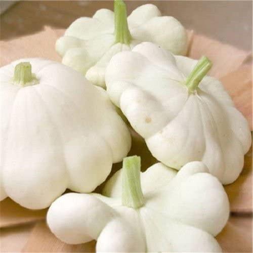 White Bush Scallop - UN