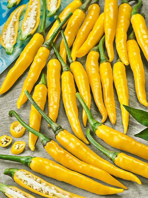 Cayenne Yellow