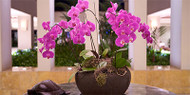 Orchid Flower Arrangements For Offices