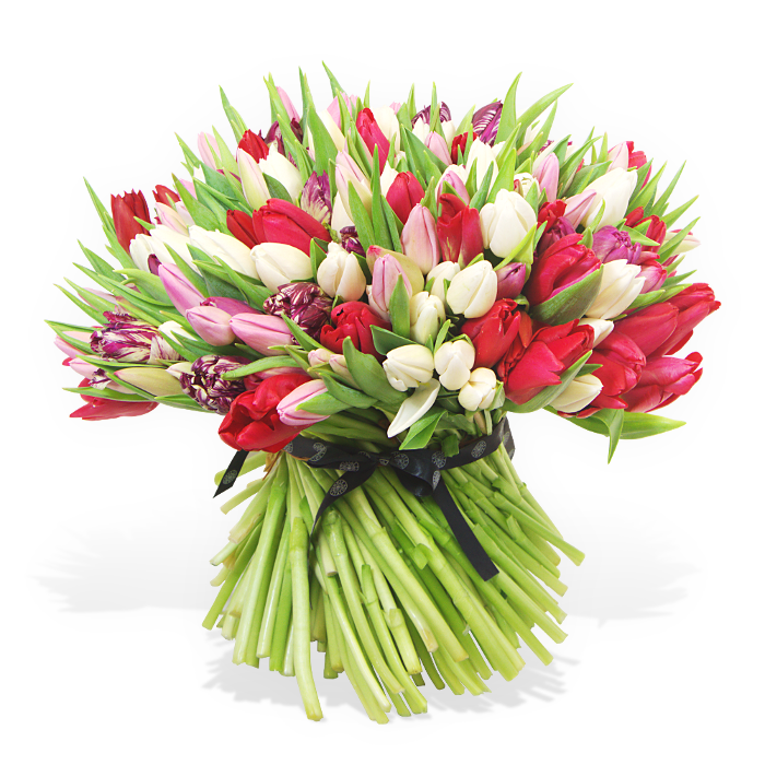 200 Pink, Red and White Tulips