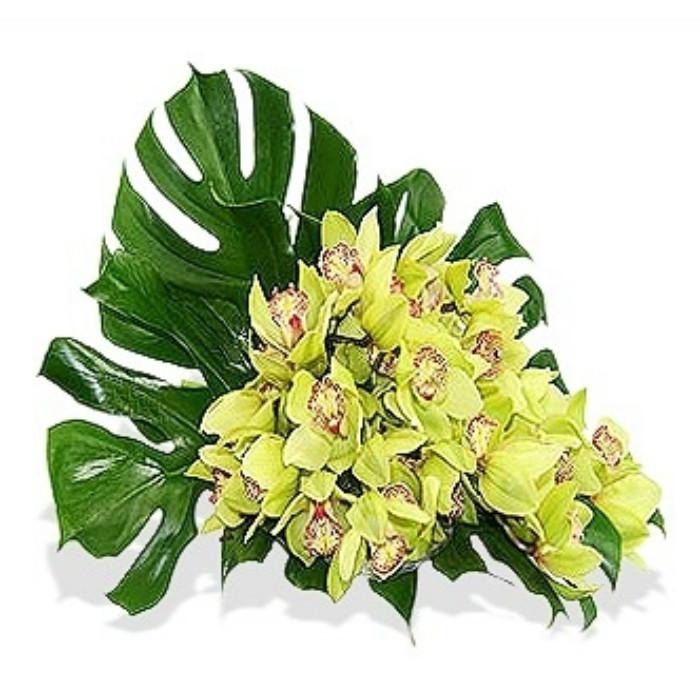 5 Large Cymbidium Orchids