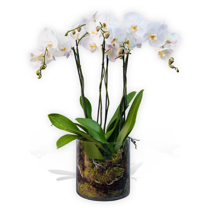 Tremendous Orchids