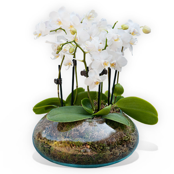 White Orchidea Vase