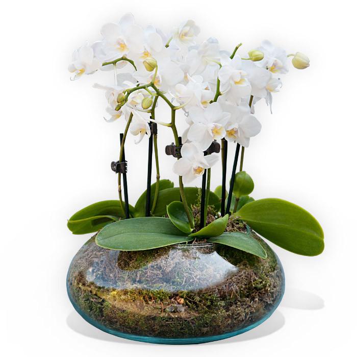 White Orchidea Vase