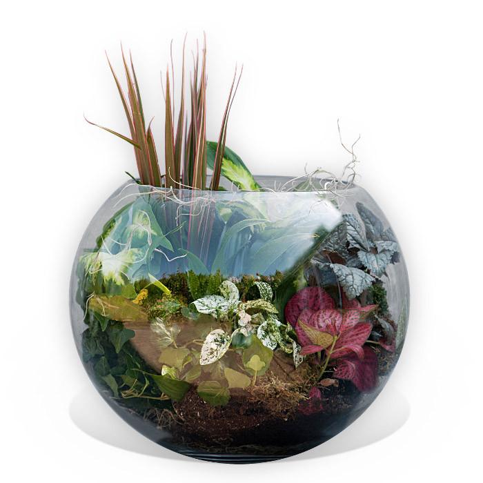House Plants Bowl
