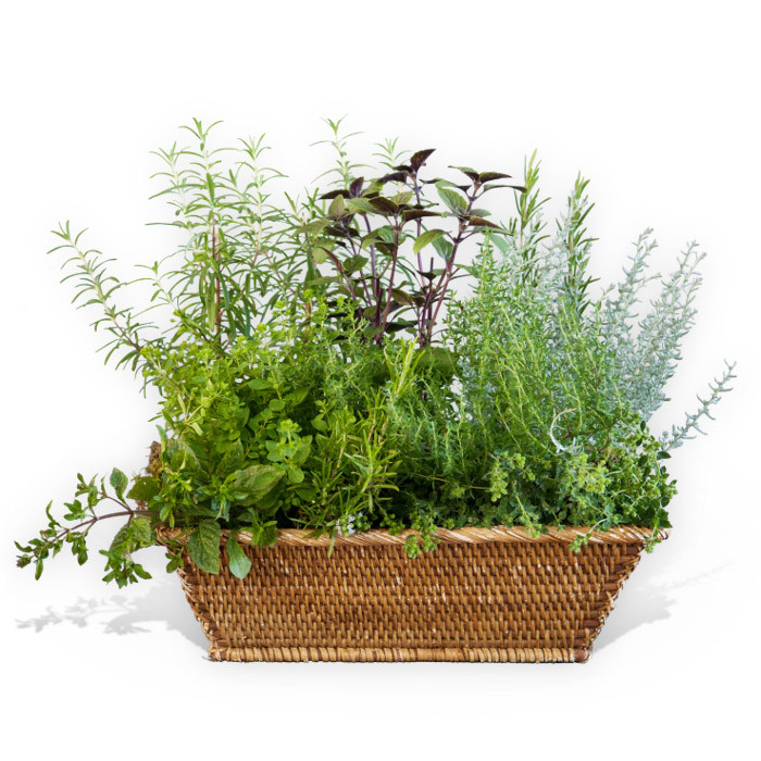 Herbal Basket