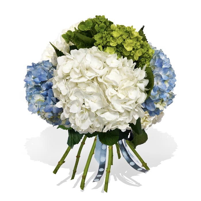 A hydrangea bouquet made of green, white and blue hydrangeas