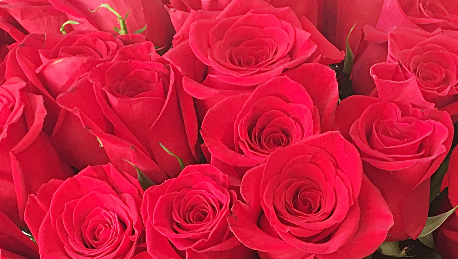 50-red-roses-bouquet-flower-station-close-up.jpg