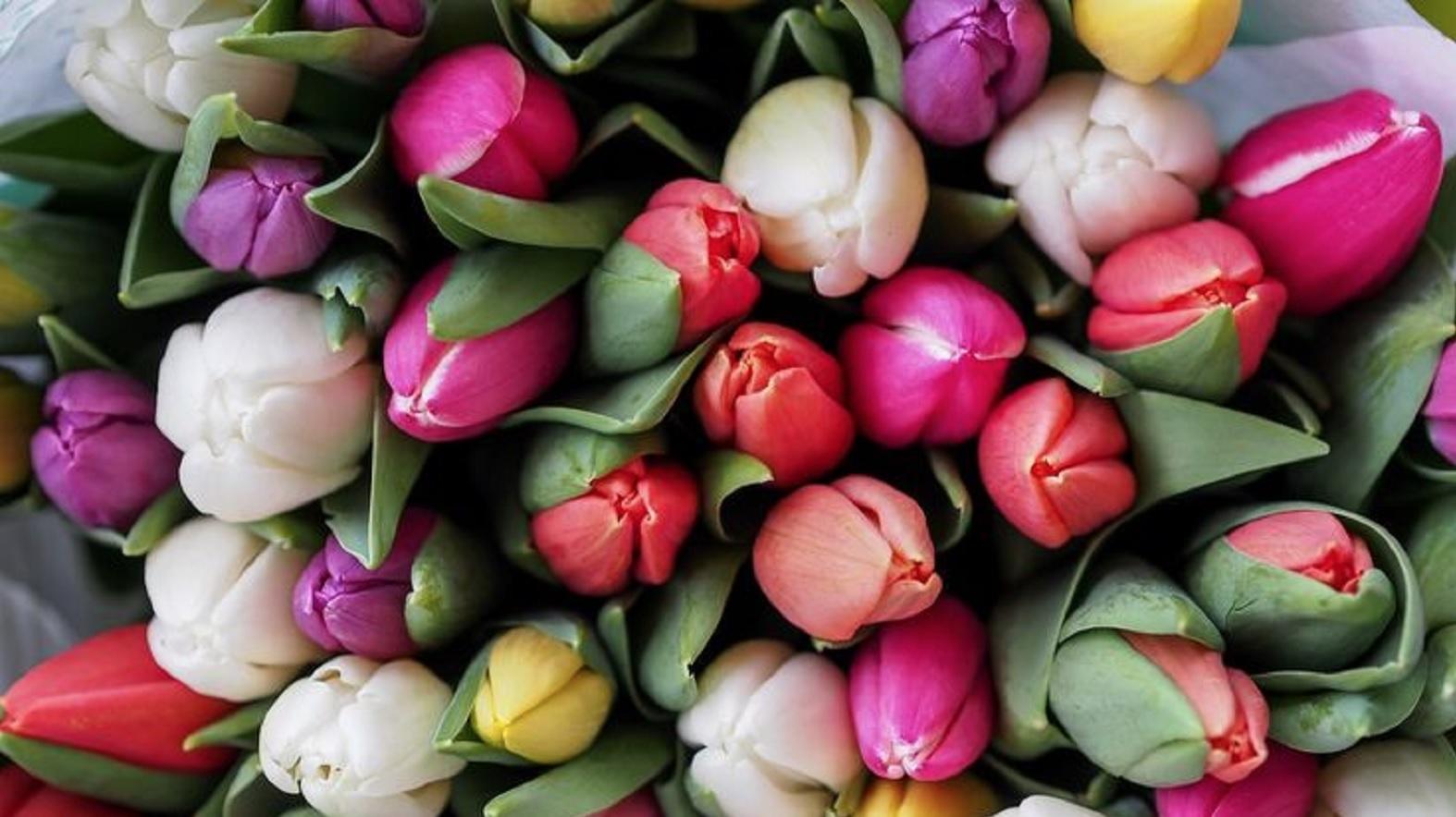 back-tulips.jpg