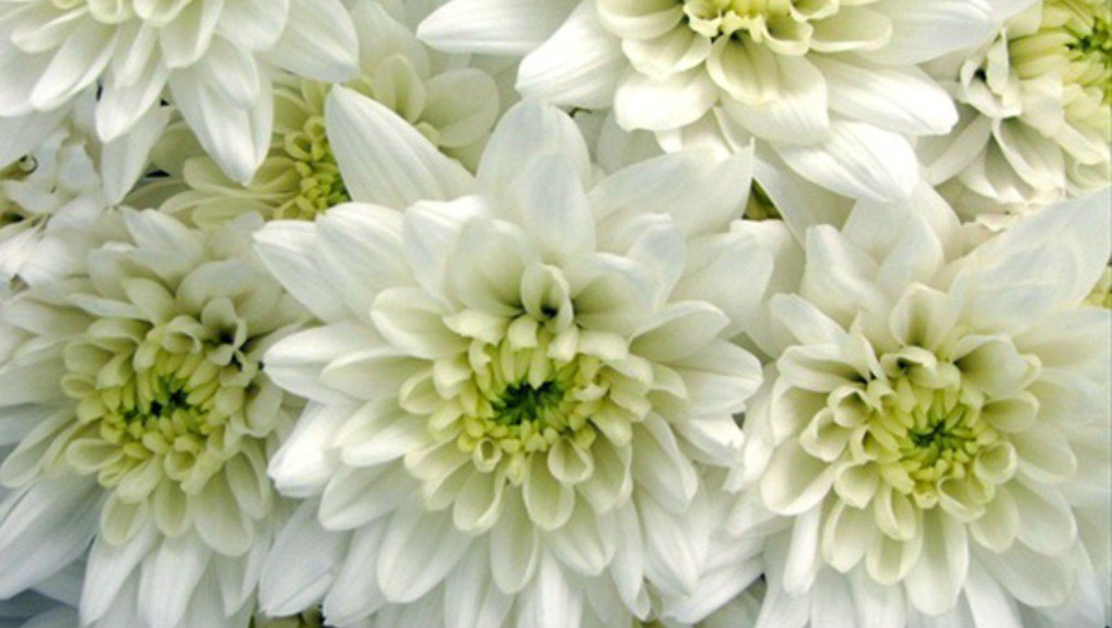dad-floral-letters.jpg