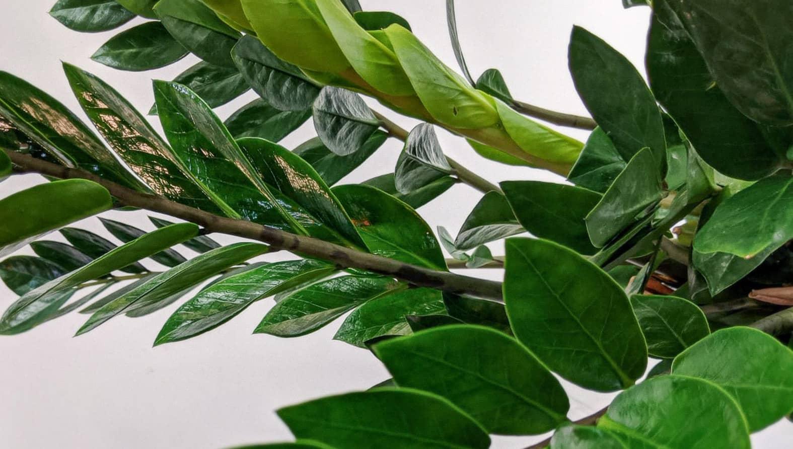 emerald-palm-full.jpg